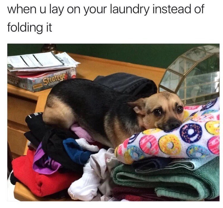 dog meme laying on clean laundry