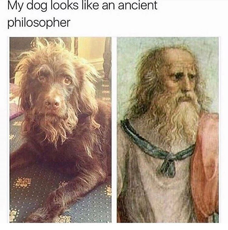 dog meme of a dog that looks like an ancient philosopher