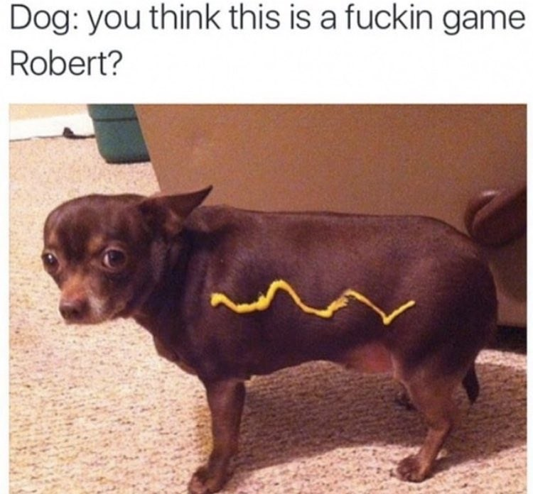 dog meme of a chihuahua that has a line of mustard on him to look like a hot dog