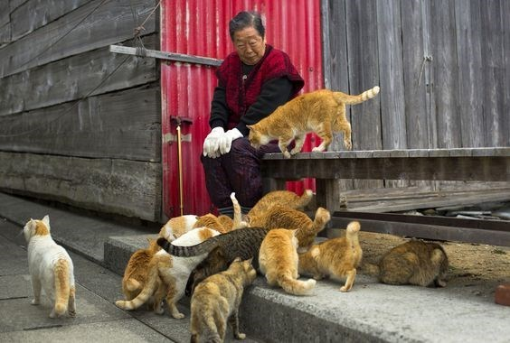 Japanese woman feeds a group of cats by a table on the island of Aoshima.