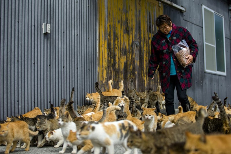 Old woman feeding the cats in Aoshima Japan, the Cat Island.