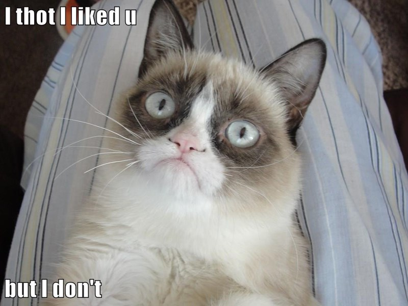 liked you Grumpy Cat thought but dont caption - 9030795520