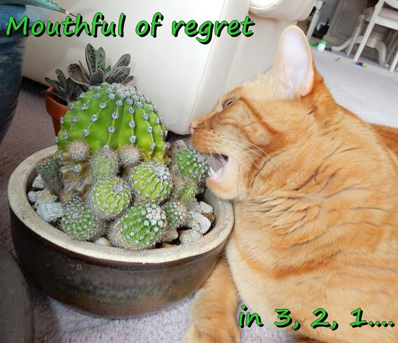cat 3 1 mouthful caption 2 regret - 9030881792
