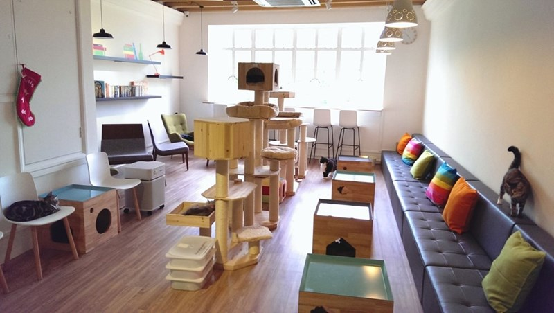 Singapore cat cafe - The Neko No Niwa Cafe