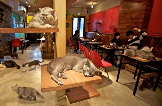 Cute cats napping all over the place at the Cat Cafe in Melbourne Australia