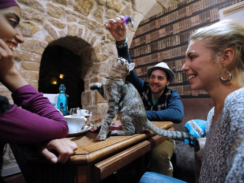 Patrons playing with a cat at the table at Les Cafe Des Chats in Paris.