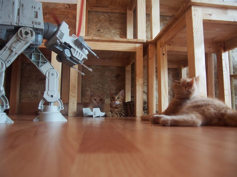 Catmoshere Cafe - Funny picture of a cat playing with an At-At in Chaing Mai Thailand
