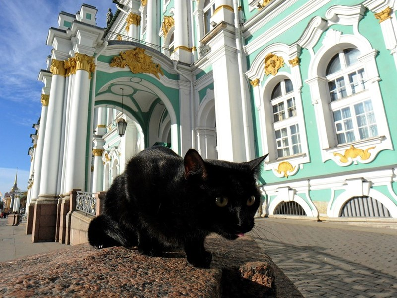 Cool picture of a slick black cat eating outside in Cats Republic, St. Petersburg Russia.