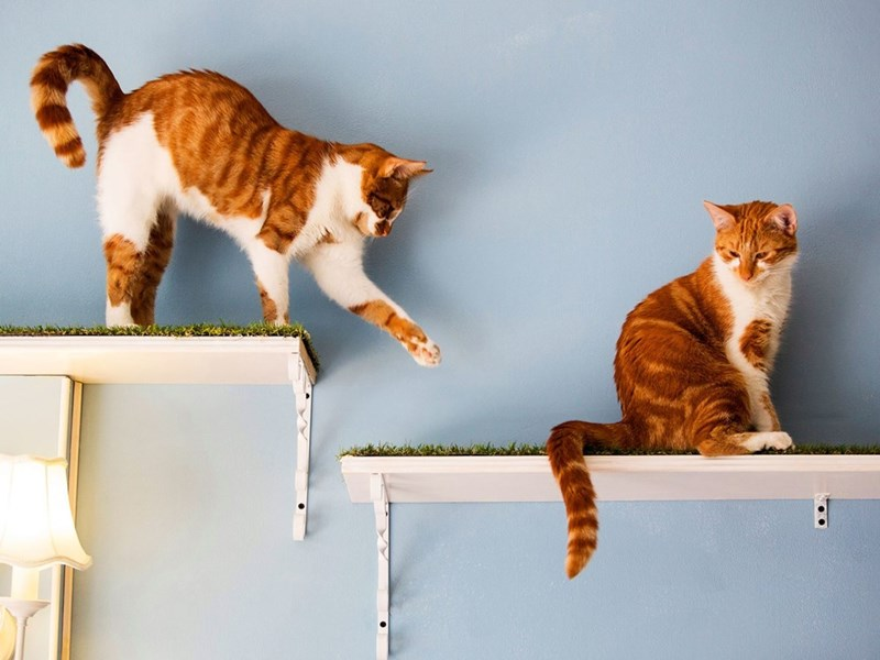 Cats playing on the shelves in Cat Emporium Cafe in London.