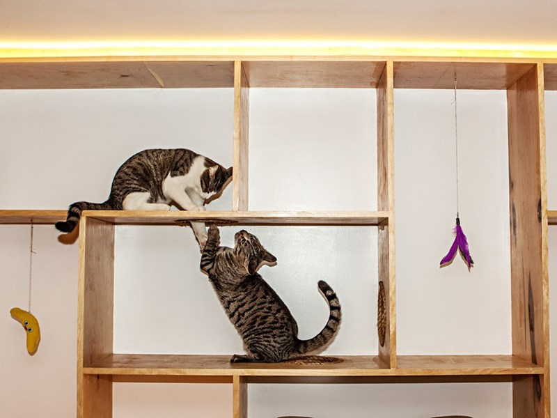 Picture of two funny cats fighting or playing with each other at Meow Parlour Cafe in NYC