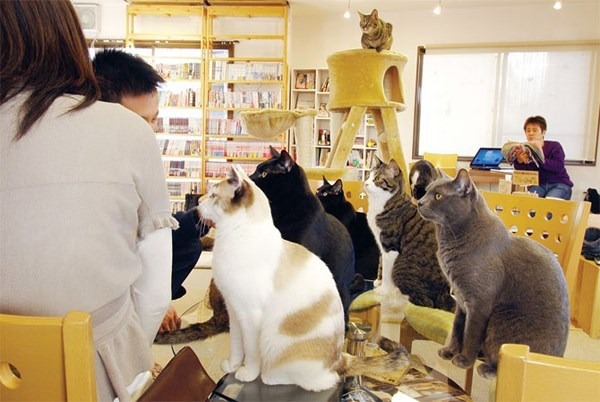 Funny picture of cats paying attention to customers at Les Cafe Des Chats in Montreal Canada