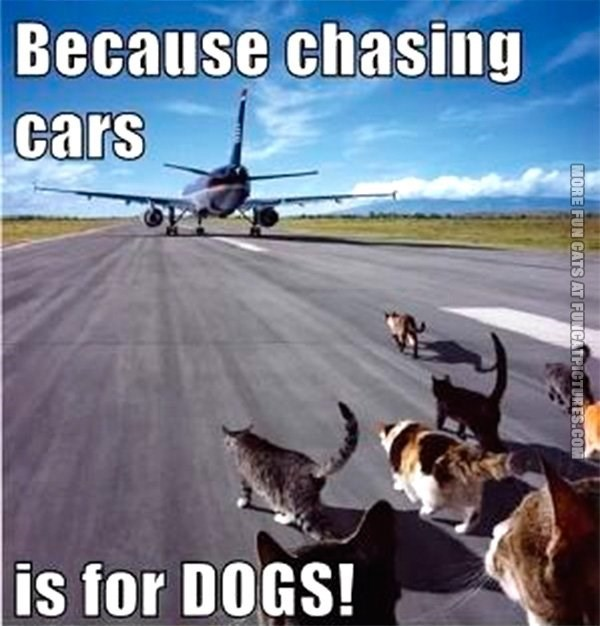 Funny meme of cats running down a runway chasing Donald Trump's airplane.