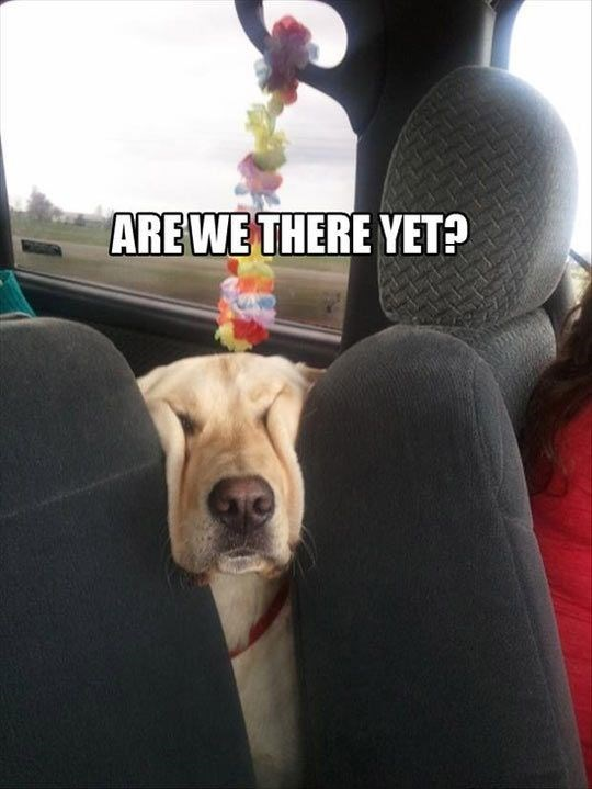 Funny dog meme of a smushed face asking if we are there yet.