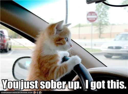 Funny meme of a cat driving and saying you just focus on sobering up, he got this.