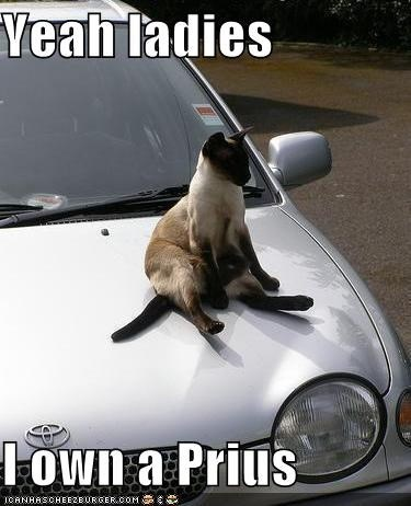 Funny cat meme of kitty on the hood of a Prius like it is the hottest thing.