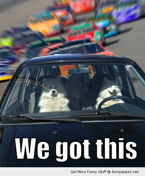"Funny meme of dogs driving a car in a race, being all like ""we got this"""