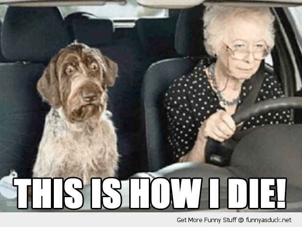 Funny meme of a dog driving with an old lady and the dog looks very scared.