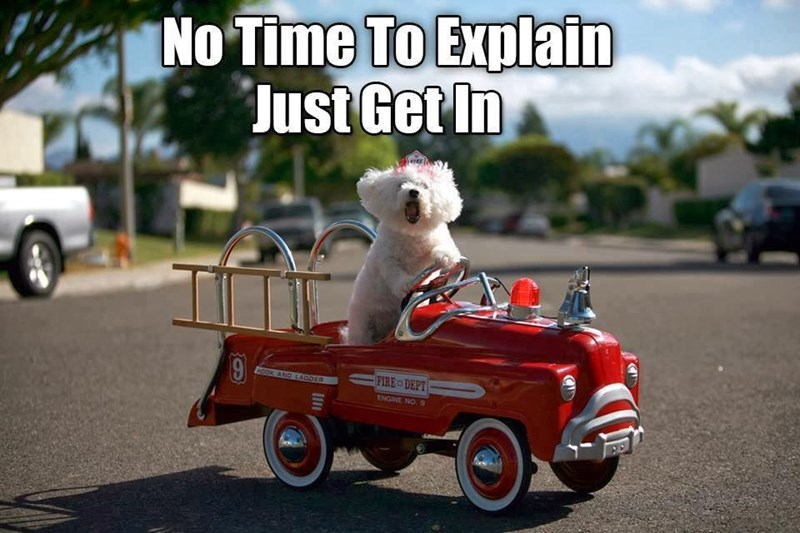 Cute meme of a funny dog in a red car saying to just get in, no time to explain.