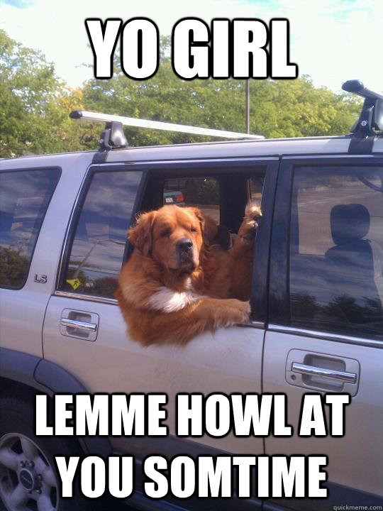 Funny meme of a dog hanging out of the side of a car to howl at a girl.