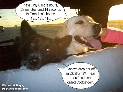 Funny meme of dogs not getting along so well on a long car trip.