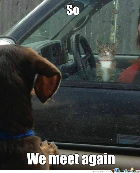 Funny meme of a dog and cat that meet up at the lights when their owners car pull up at the same time.
