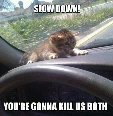 Funny meme of a kitten on the dashboard being a bit dramatic.