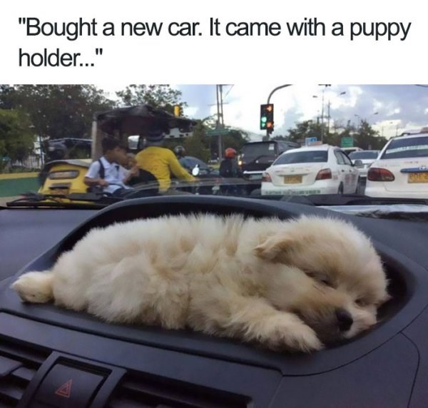 Funny meme of a new car that has a 'puppy holder'.