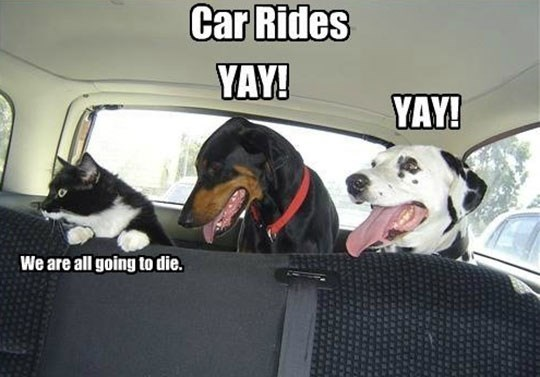 Funny meme of dogs loving the car ride and cats terrified of it.