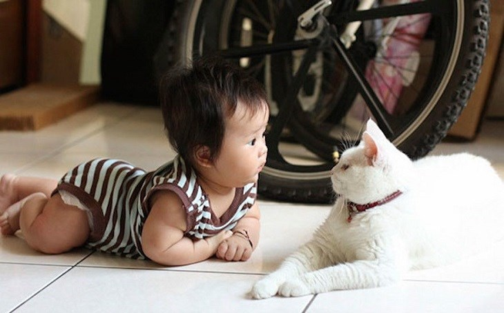 Picture of a white cat and an Asian baby playing on the floor.