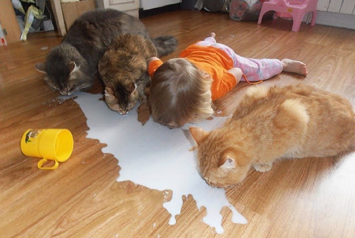 Funny picture of kid and cats licking the milk that spilled on the nice hardwood floor.