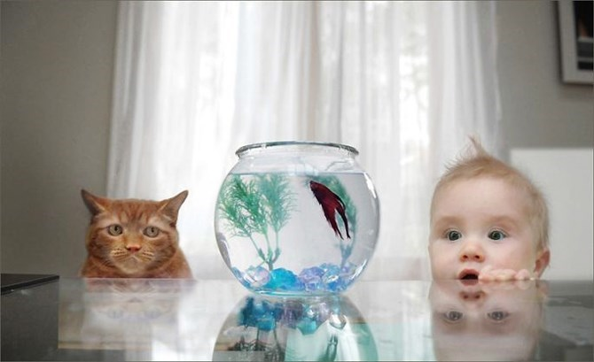 Funny picture of a cat and a baby staring at the gold fish bowl that is on the table.