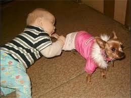 Funny picture of a dog dressed up in a fur coat and a kid that looks like he is trying to eat the dogs leg.