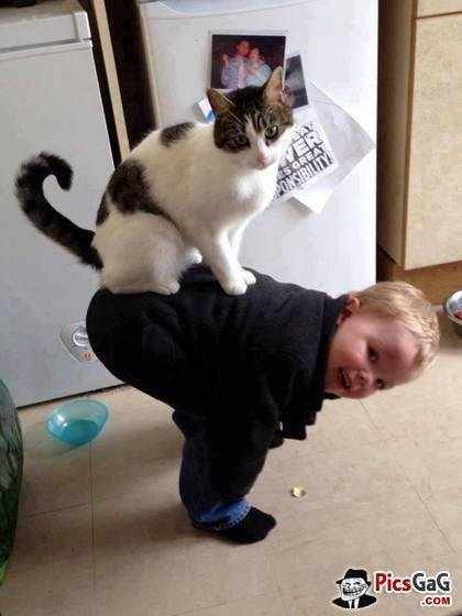 Cute picture of a funny cat standing on the back of a kid that is hunched over.