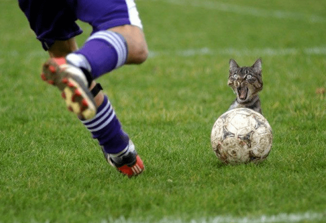 Funny picture of cat about to get kicked from that soccer ball.