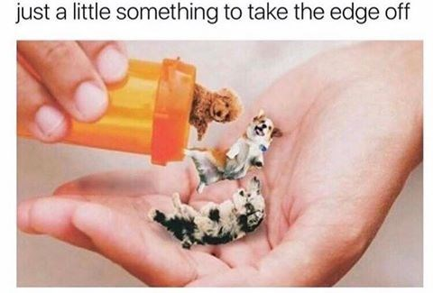 Pills to take the edge off: the pill bottle is filled with dogs.