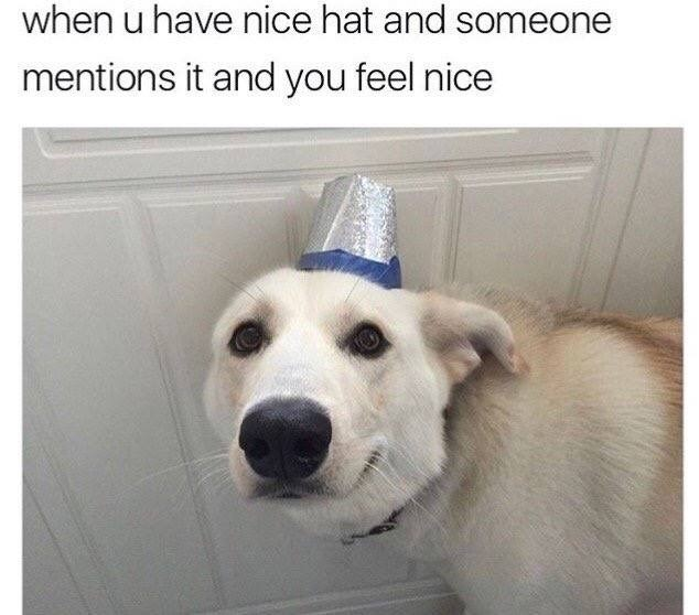 monday meme of dog with nice hat about how nice it feels when someone mentions it