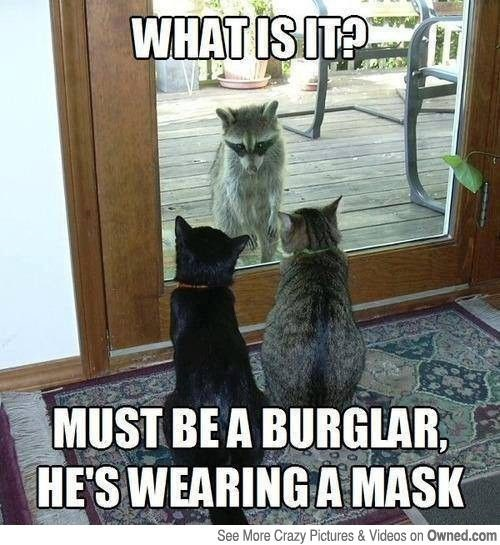 Meme and funny picture of a raccoon being observed by two cats who thing he is a burglar.