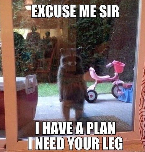 Funny raccoon meme of one standing upright next to the glass sliding door.