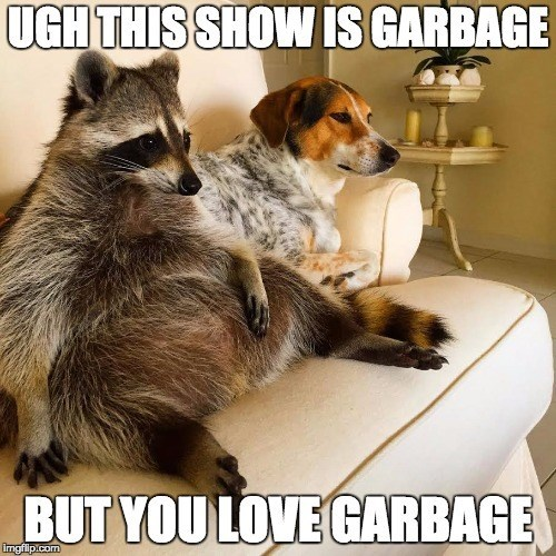 Funny picture of a raccoon chilling with the dog on the couch, which has been made into a meme about tv shows being garbage.