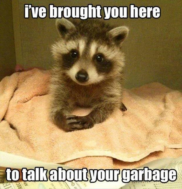 Funny picture of raccoon in a meme trying to make serious talk about garbage.