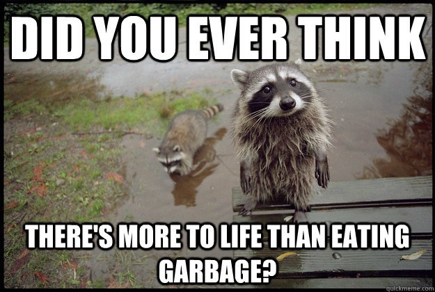 Funny meme of a raccoon getting all deep and asking if there is more to life than eating garbage.