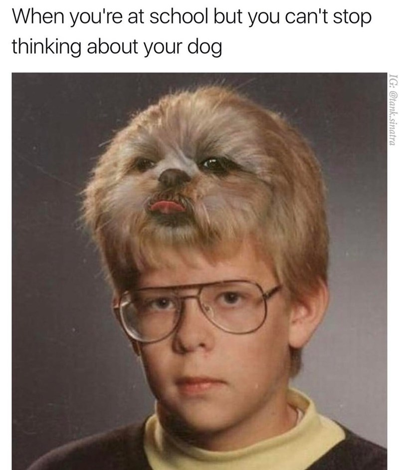 When you're at school but you can't stop thinking about your dog, school photo with dog superimposed on 80's hair style.
