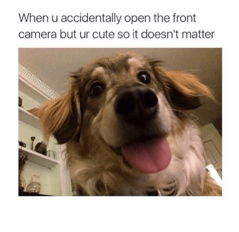When you open the front facing camera by accident but it doesn't matter because you are a cute dog.
