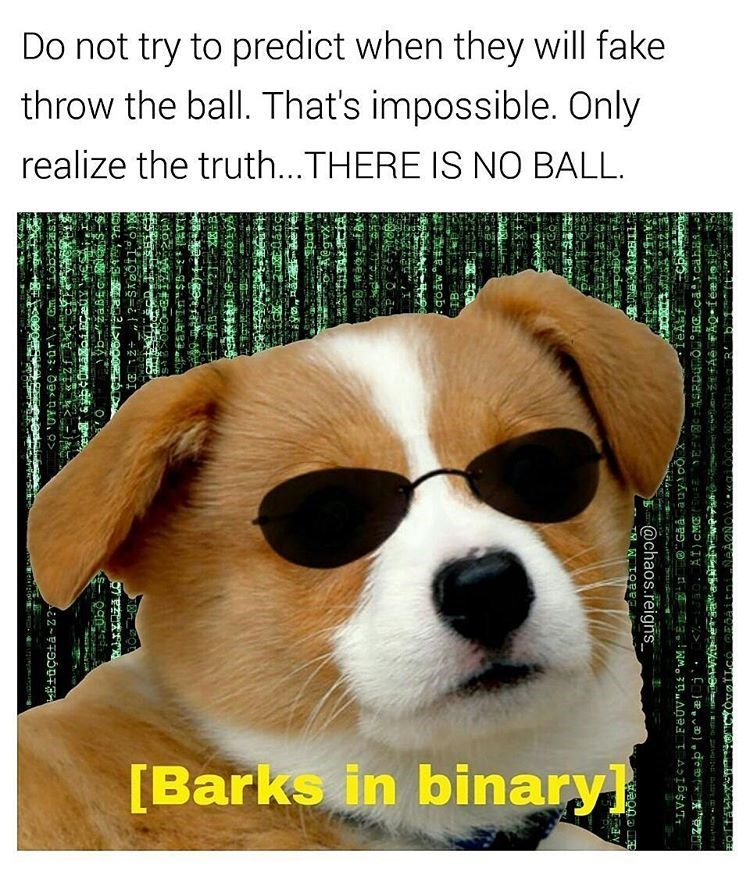 Funny meme of a dog wearing sunglasses, copying the kid with the spoon from the matrix - Dog meme about the matrix and chasing the invisible ball.