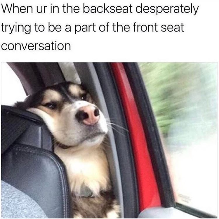 Funny dog meme about trying to get into the conversation going on in the front seat of a car.