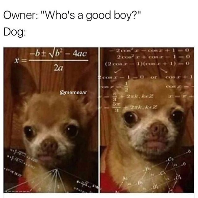 Funny pictures of a confused Chihuahua dog who is doing algebra math when asked 'Who's a good boy?' made into a funny meme.