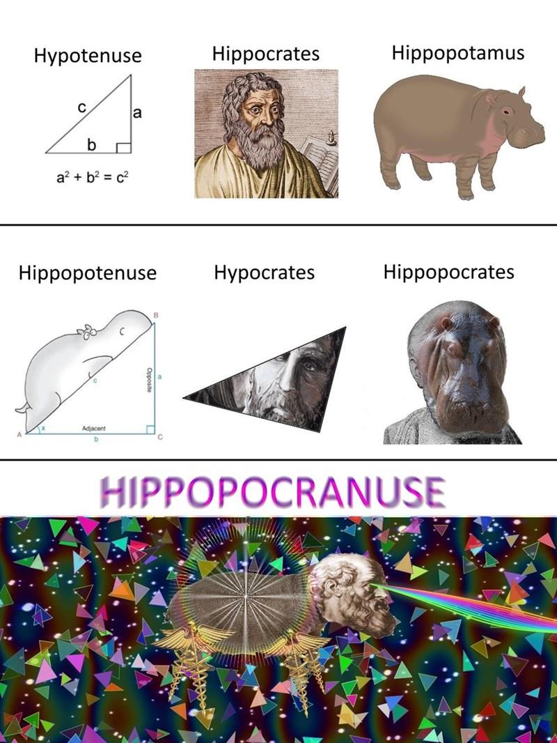 rompecabezas usando hipopotamo hipotenusa e hipocrates