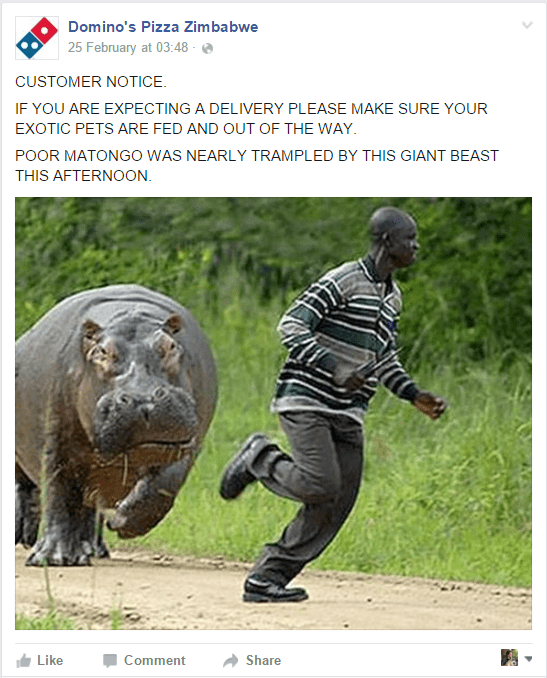 Adaptation - Domino's Pizza Zimbabwe 25 February at 03:48 CUSTOMER NOTICE IF YOU ARE EXPECTING A DELIVERY PLEASE MAKE SURE YOUR EXOTIC PETS ARE FED AND OUT OF THE WAY. POOR MATONGO WAS NEARLY TRAMPLED BY THIS GIANT BEAST THIS AFTERNOON Like Comment Share