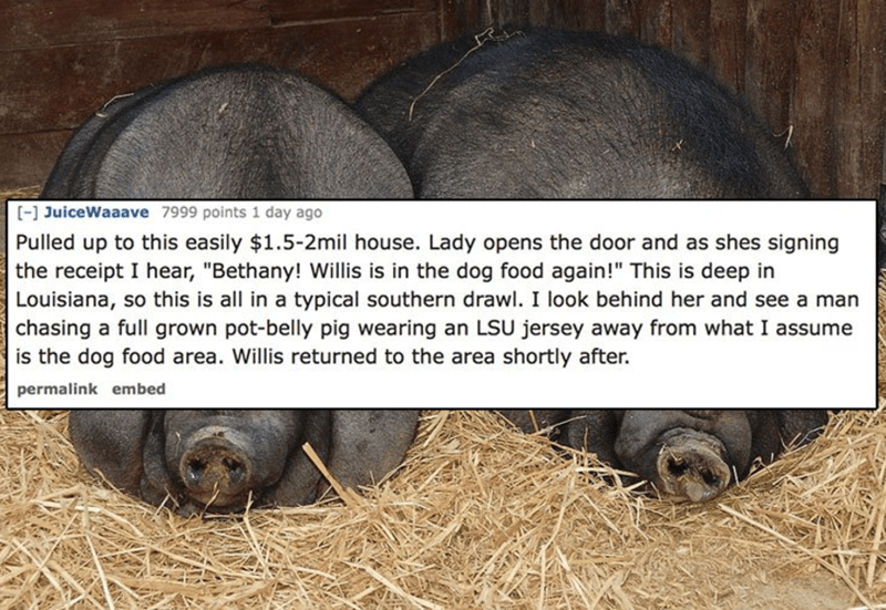 delivery driver tells strange story about a pot-bellied pig