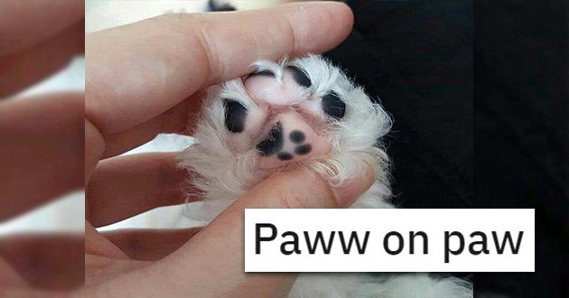 paws jelly bean toes cats